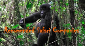 How to Get to Bwindi Forest National Park For Gorilla Trekking